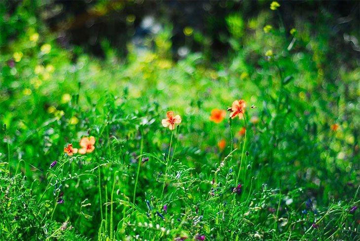 kill bermuda grass
