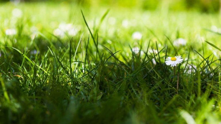 eliminate bermuda grass