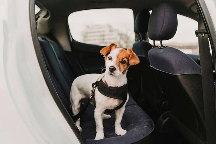 best dog car harness seat belt