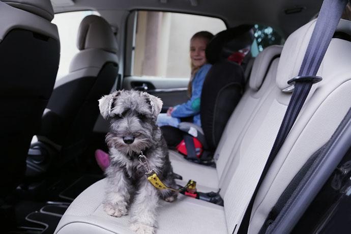 best dog car harness for german shepherd